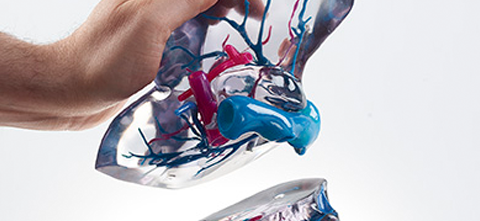 A person holding a life-like, multi-colored, 3D printed liver made from the Stratasys J750 printer