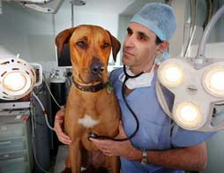 Southpaws-Specialty-Surgery-For-Animals
