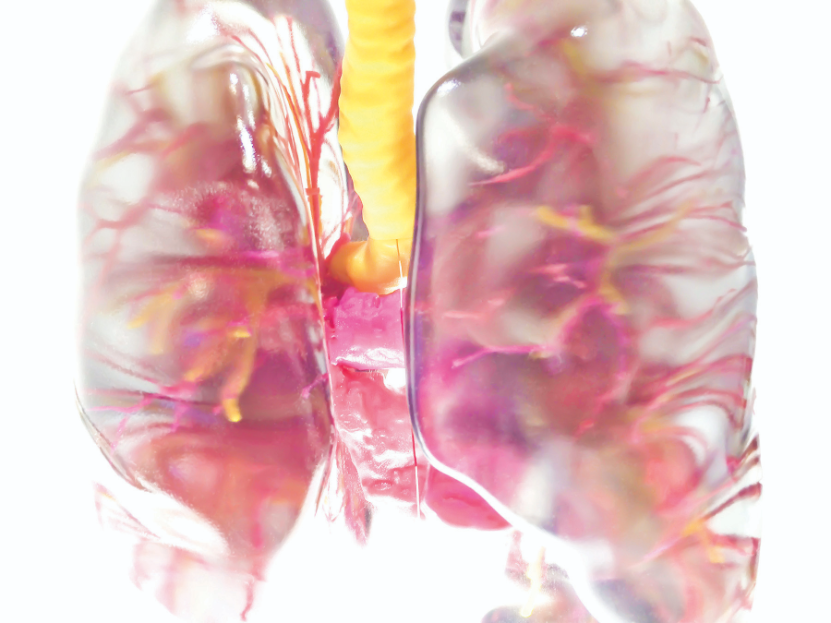 Groups of closely related organs are 3D printed for medical students to learn their structures and relationships.